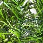 Preestreno: seto-artificial-jardin-verde-imagen3