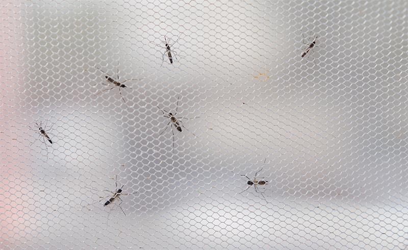 Ochrona przed komarami